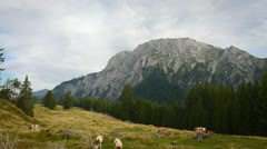 timelapse clouds and cattle in Austrian mountain scenery - stock footage