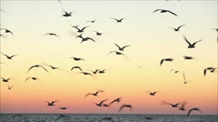 large number of gulls flying against the evening sky 6 Stock Footage