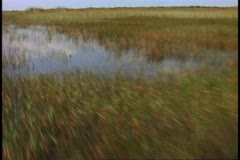Everglades airboat ride, POV from front of boat sailing out fast over the - stock footage