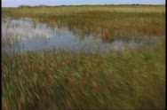 Stock Video Footage of Everglades airboat ride, POV from front of boat sailing out fast over the
