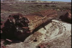 Petrified Forest National Park, wide shot of stone log Stock Footage