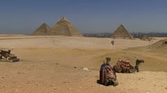 Camels resting pyramid in background Stock Footage