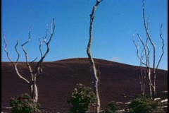 Big Island of Hawaii, cinder hill, three dead trees standing alone, wide shot Stock Footage