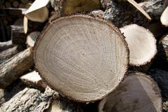 Sliced oak fire wood Stock Photos