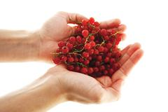 Female hands with red currant berries Stock Photos