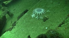 Beautiful jellyfish floating among the wreckage ship in deep water, Red Sea Stock Footage