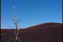 Big Island of Hawaii, cinder hill, one dead tree standing alone, wide shot Stock Footage
