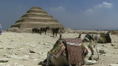 Camels resting with background step pyramid Stock Footage
