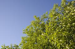 Spring apple tree on a blue sky backgroung Stock Photos
