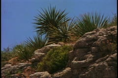 Desert southwest, New Mexico, plateau, desolate, medium shot of yucca plants Stock Footage
