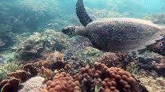 Hawksbill sea turtle - stock footage