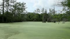 Green Swamp 2 - stock footage