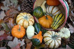 Basket Of Gourds Stock Photos