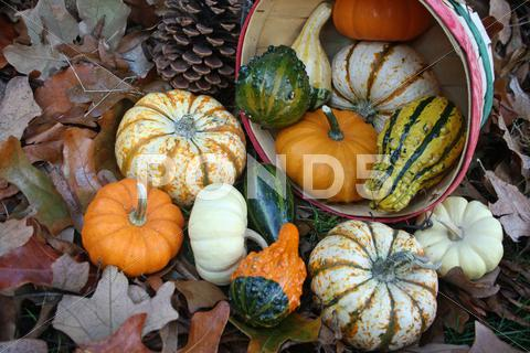 Stock photo of Basket Of Gourds