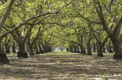 orchard - stock photo