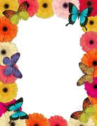 butterflies & daisies frame - stock illustration