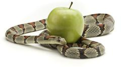 Snake and apple Stock Photos