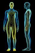 Body analysis Stock Photos