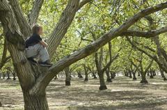 tree climber - stock photo