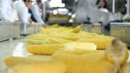 Stock Video Footage of Corn processing factory