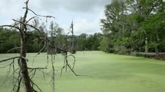 Green Swamp with Trees - stock footage