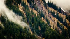 Cloudy forest Stock Footage