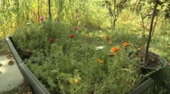 Flower Garden with Various Plants Stock Footage