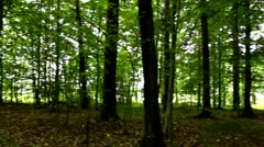 Turning around in the forest - stock footage
