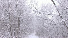 Snowfall on path in the woods Stock Footage