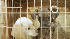 Two pound rescue puppies waiting for adoption Stock Footage