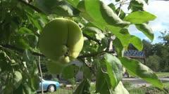 Windy apple - stock footage