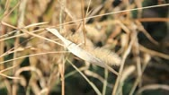 Stock Video Footage of Dry grass close-up