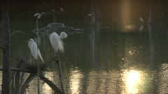 Birds Sitting Over Lake - stock footage
