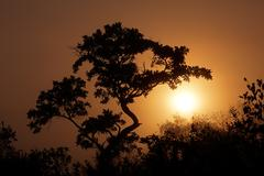 Stock Photo of Savanna sunrise