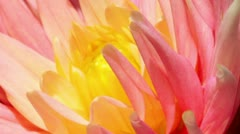 Petals of a flower - macro Stock Footage