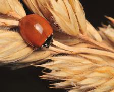 Ladybug 02 Stock Photos