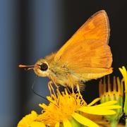Moth on Flower Stock Photos