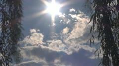 A beautiful sun between willow,Time Lapse Stock Footage