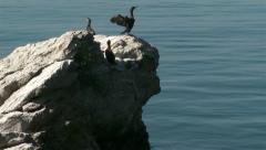 Cormorants on sea stack Stock Footage