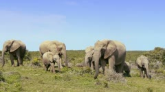 elephant family with a baby - stock footage