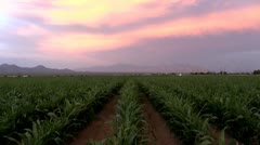 Sunset Over Green Leafy Urban Farmland Stock Footage