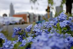 street flowers - stock photo