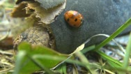 Stock Video Footage of Beautiful Lady bug