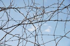 vine wire - stock photo