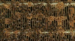 Honey bees swarm close up Stock Footage