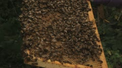 Bees swarm on frame Stock Footage