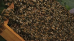 Bees swarm on tray taken out Stock Footage
