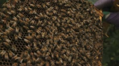 Bees swarm over tray close up Stock Footage