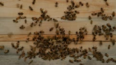 Bees come in and out of hive Stock Footage