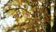 Stock Video Footage of Autum leaves
